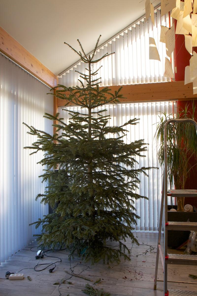 Weihnachtsbaum-011.jpg